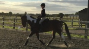 Dressage lesson with Robert Massey
