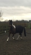 Barney learning the concept of lunging
