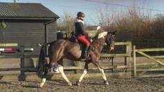 Tabby & Barney Flat lesson with Trainer Robert K Massey / Massey Equestrian International