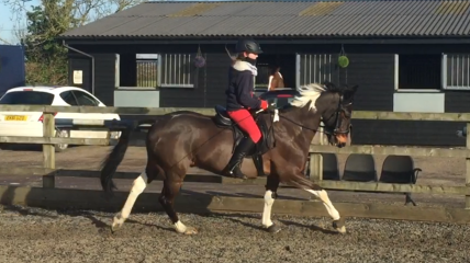 Tabby & Barney Flat lesson with Robert Massey