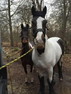 Gamble & Barney enjoy Epping Forest