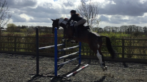 Tabby & Barney / Massey Equestrian International