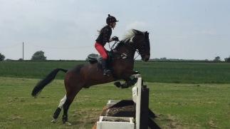 Tabby/Barney / Massey Equestrian International