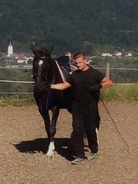 Klassische In-Hand Arbeit / Massey Equestrian International